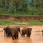 """Sri Lanka """"zapiski z podróży"""""""