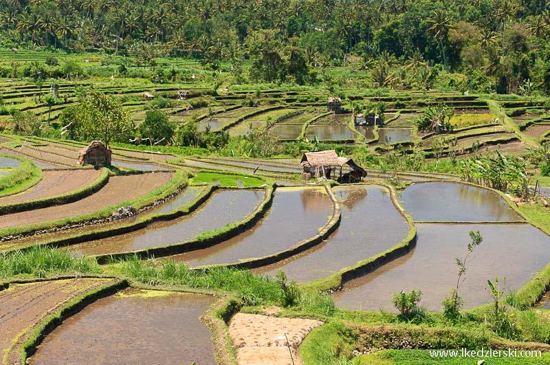 bali tarasy ryżowe