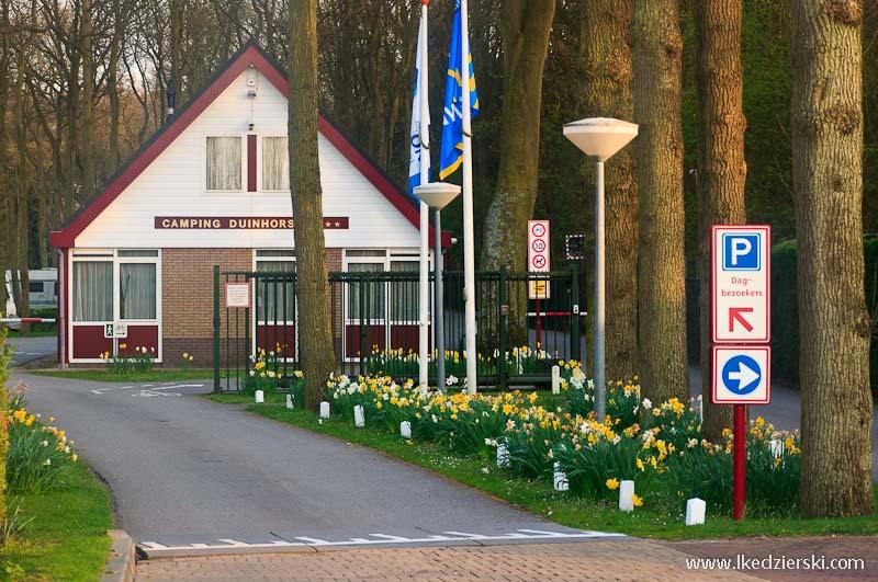 holandia informacje praktyczne camping haga duinhorst