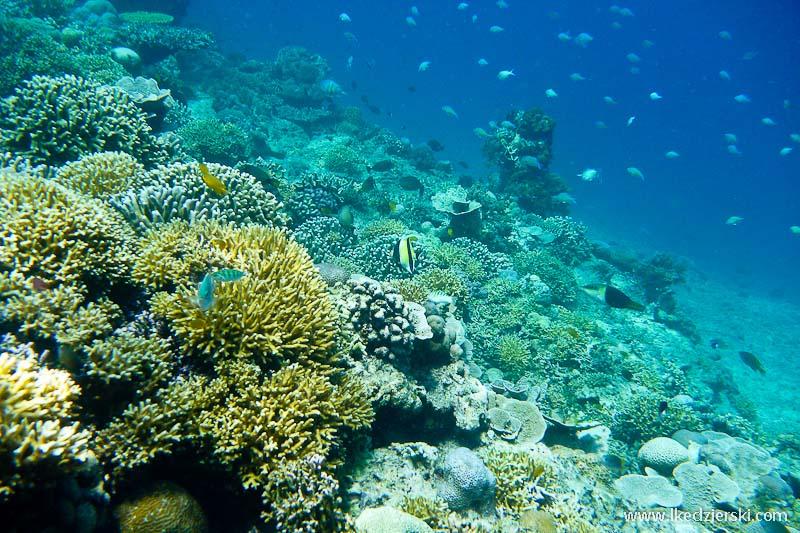 gili trawangan snorkeling rafa