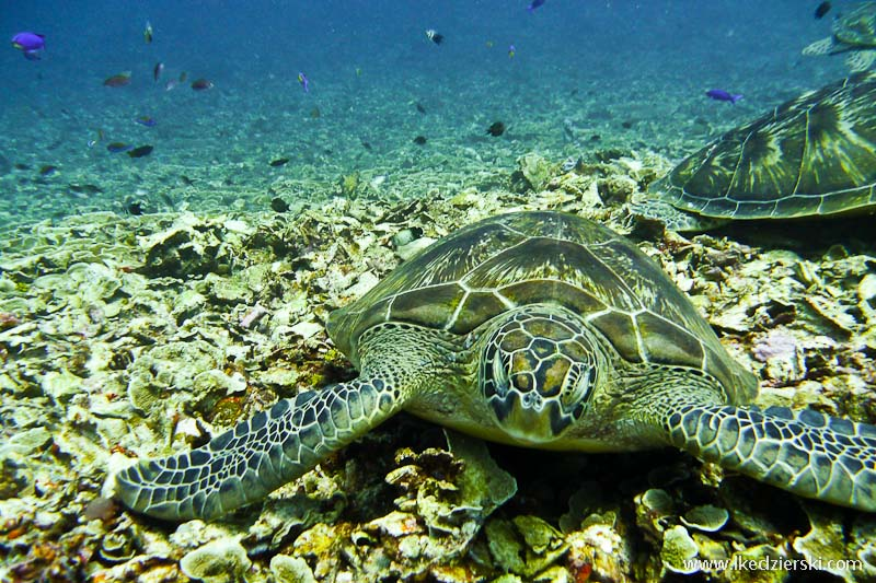 gili trawangan snorkeling żółw