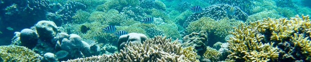 panorama gili trawangan snorkeling