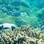 Gili Trawangan snorkeling trip – magia podwodnego świata