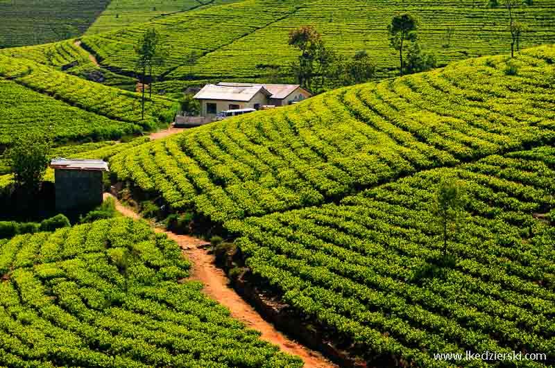 sri lanka podróż bandaraeliya plantacja herbaty
