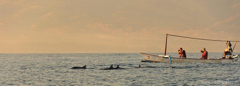 delfiny w lovina