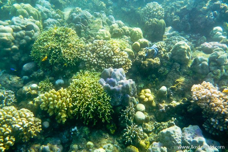 snorkeling w lovina