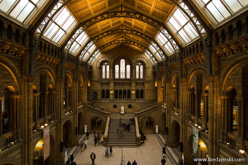 muzea londynu museum of natural history