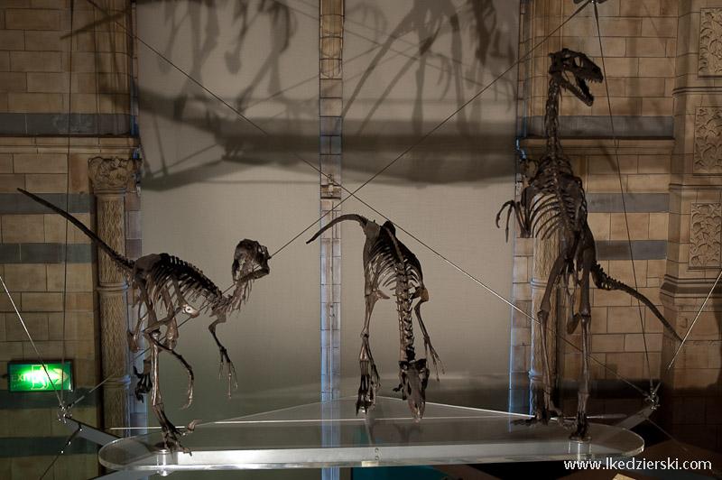 museum szkielet dinozaura