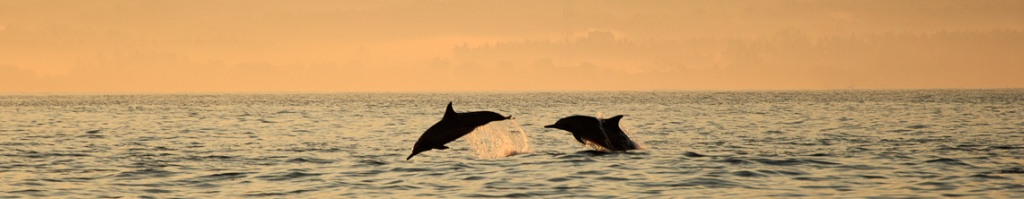panorama delfiny w lovina