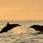 Spotkanie z delfinami w Lovina