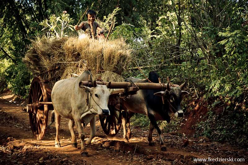 birma drewniany wóz