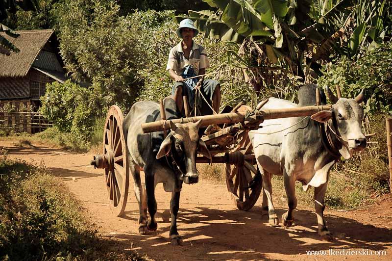 birmański drewniany wóz