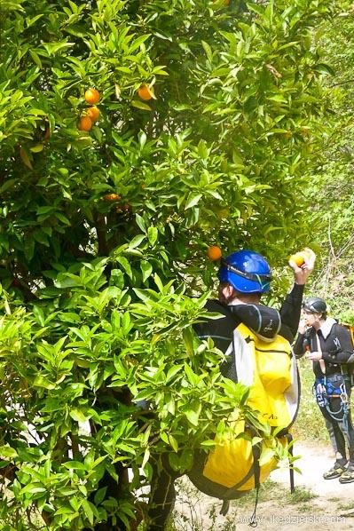 kreta sad pomarańczowy
