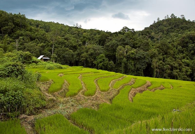 tajlandia pola ryżowe