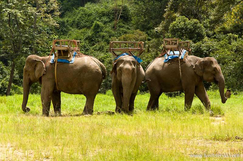 tajlandia słonie