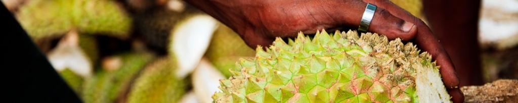 panorama durian król owoców