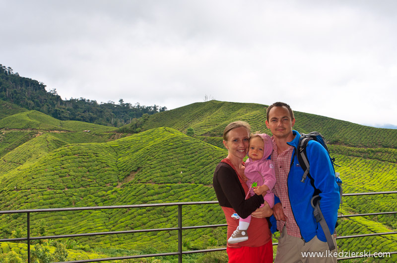 malezja cameron highlands