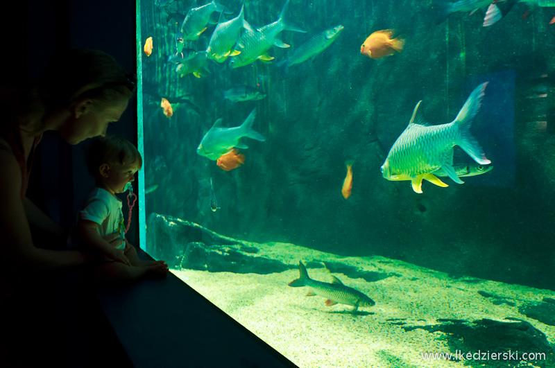 malezja langkawi akwarium