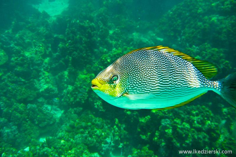 Pulau Payar – morski park, gdzie można zaznać przyjemnego snorkelingu.
