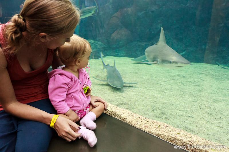 Singapur. Wyspa Sentosa. S.E.A. Aquarium - największe na świecie akwarium - jest mega!!!