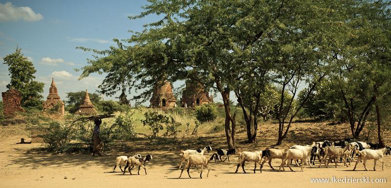 bagan kozy