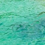 Snorkeling na Tioman? Czemu nie