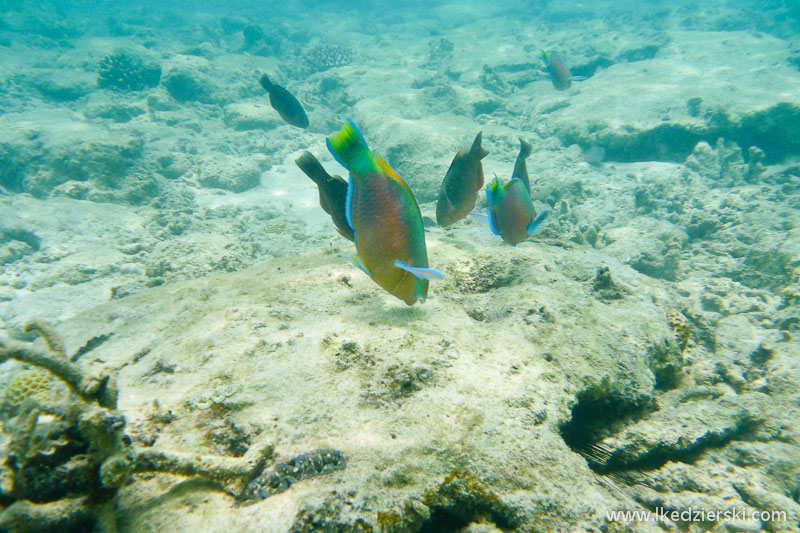 snorkeling na tioman