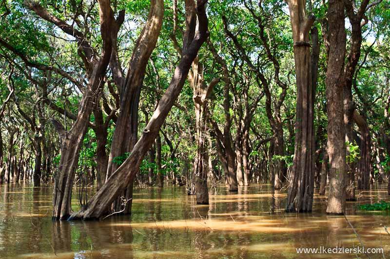 kambodża floating forest