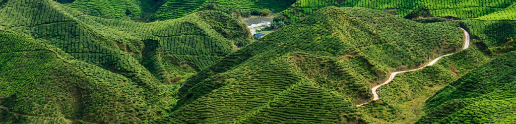 panorama cameron highlands
