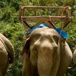 Tajlandia z maluchem u boku – zapiski z podróży