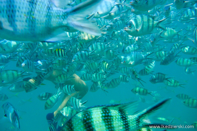 tajlandia rafa koralowa