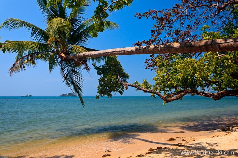 tajlandia palma