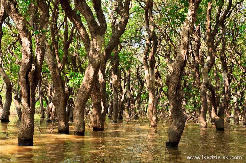 namorzynowy las Flooded Mangrove Forest