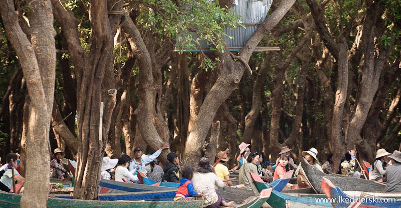 namorzynowy las mangrove forest łodzie