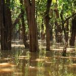 Namorzynowy las w Kampong Phluk, czyli pływanie w zupie