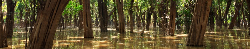panorama mangrove forest
