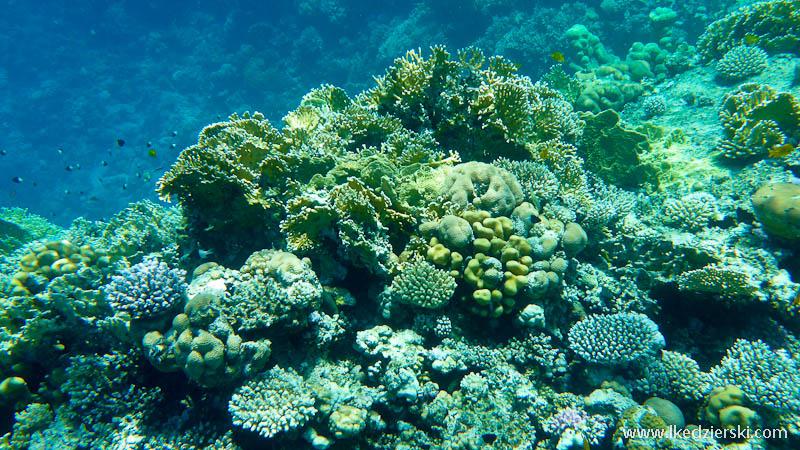 snorkeling w egipcie rafa koralowa