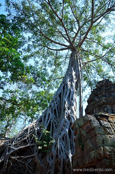 ta prohm temple drzewa