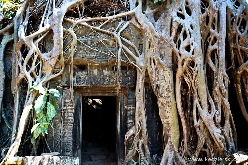 ta prohm temple korzenie