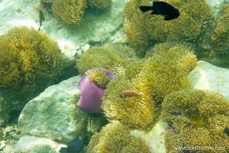snorkeling na koh chang