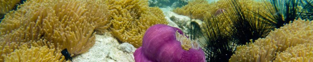panorama koh chang snorkeling