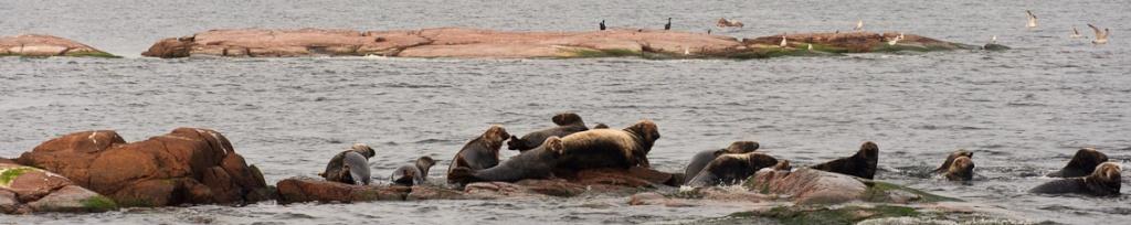 panorama wyspa tat foczki