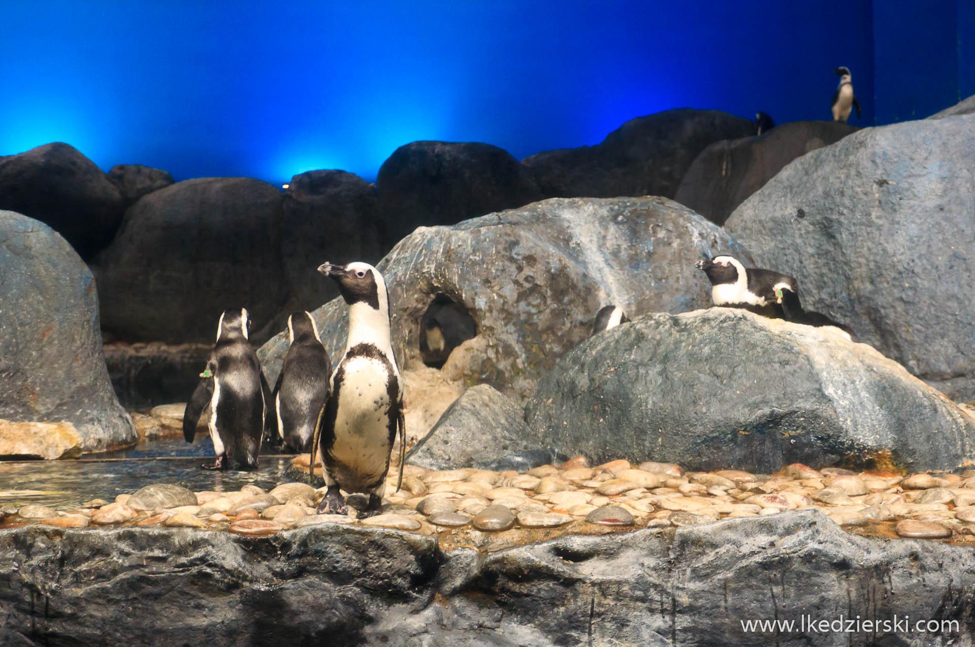akwarium na langkawi pingwiny