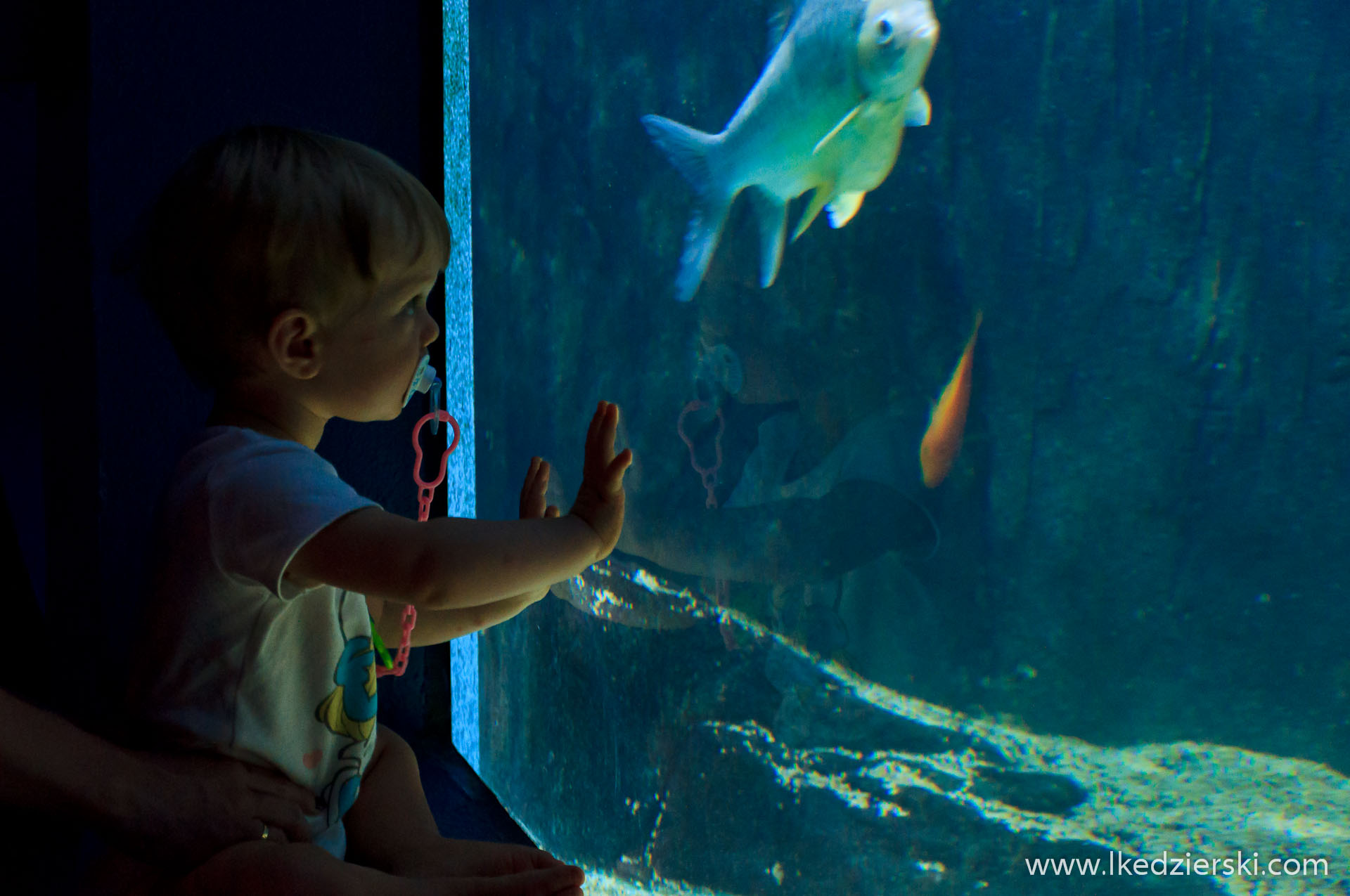 akwarium na langkawi