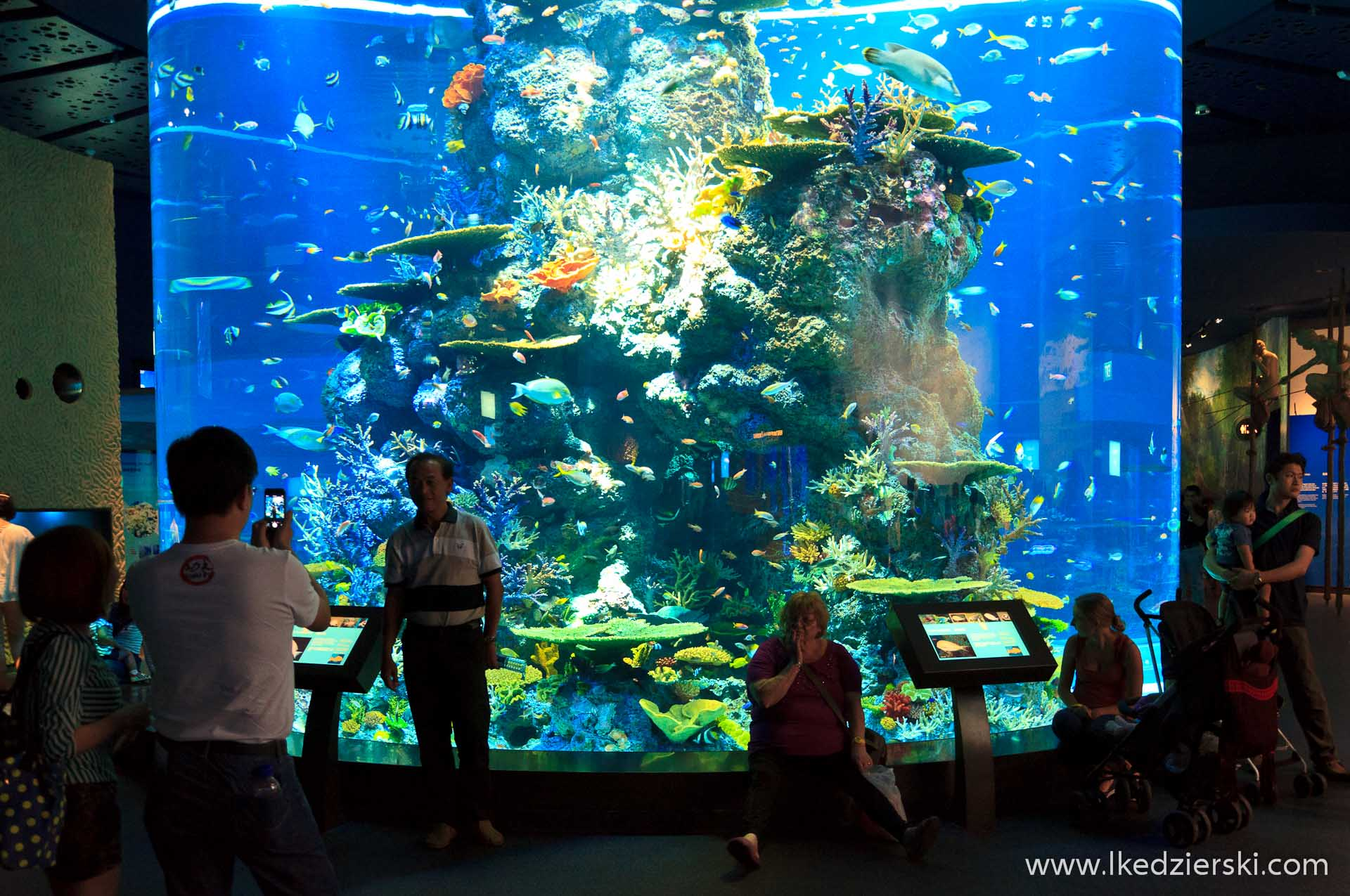 akwarium w singapurze