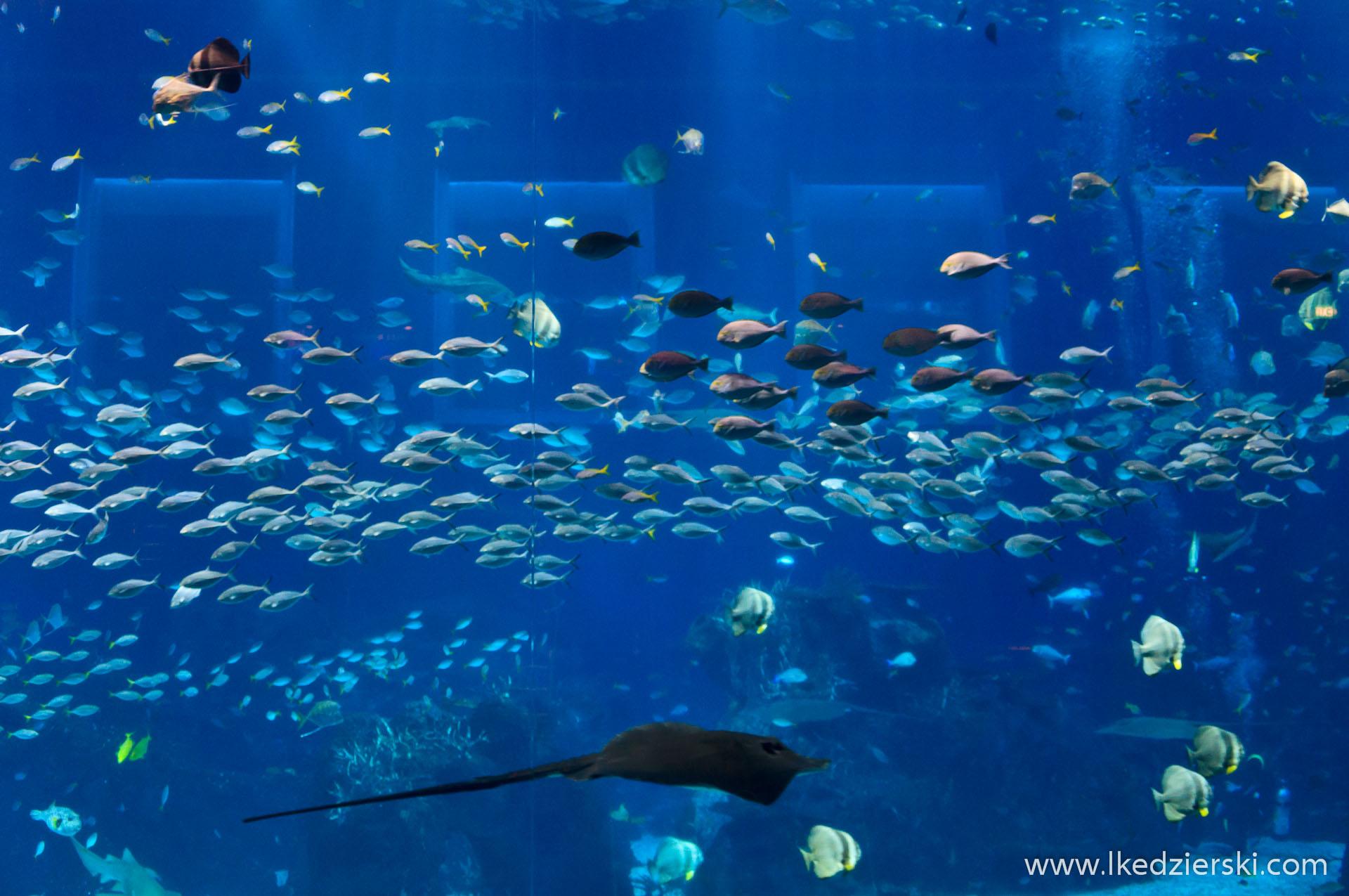 Open Ocean S.E.A. Aquarium