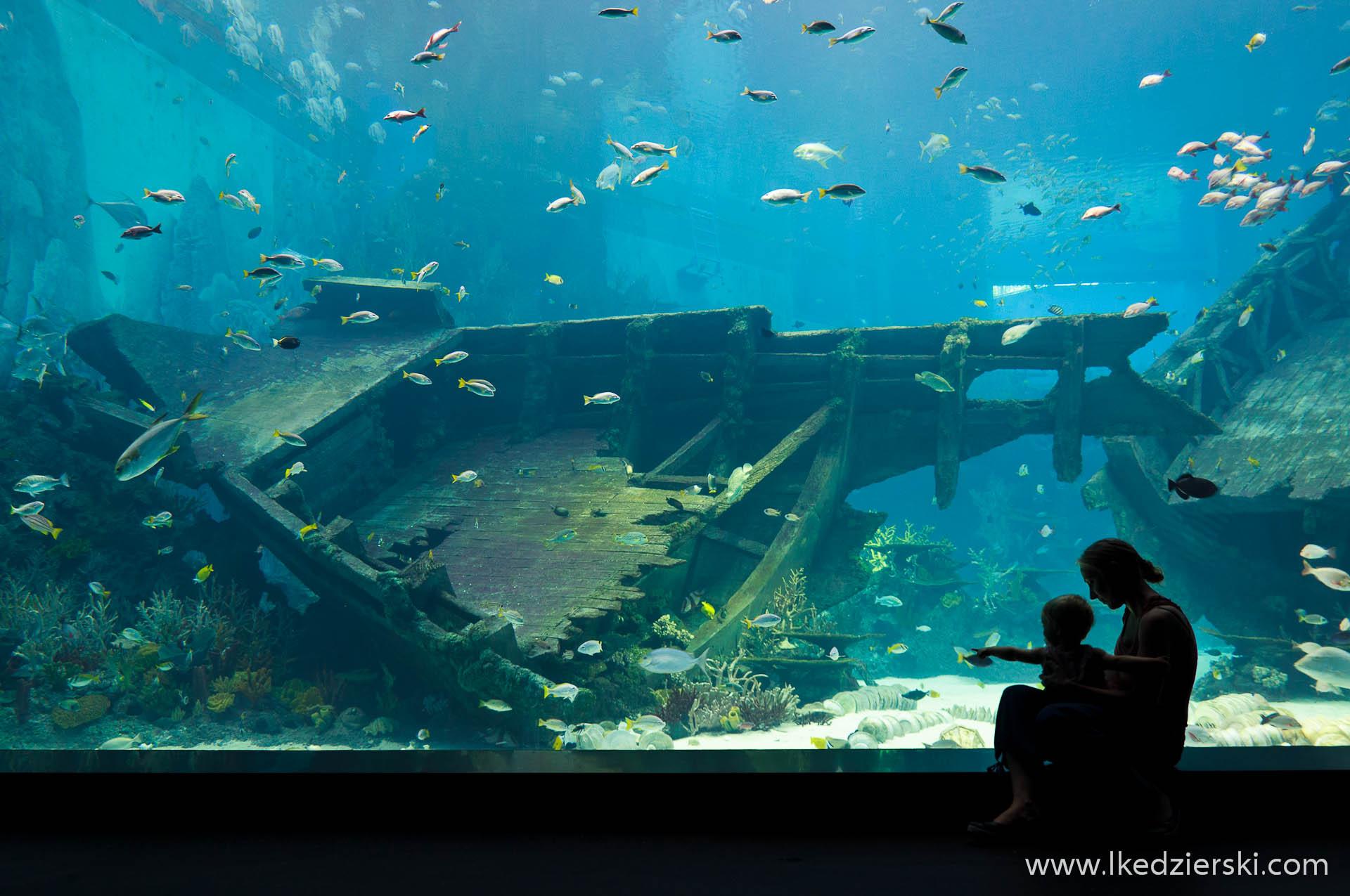 akwarium w singapurze nadia w podróży