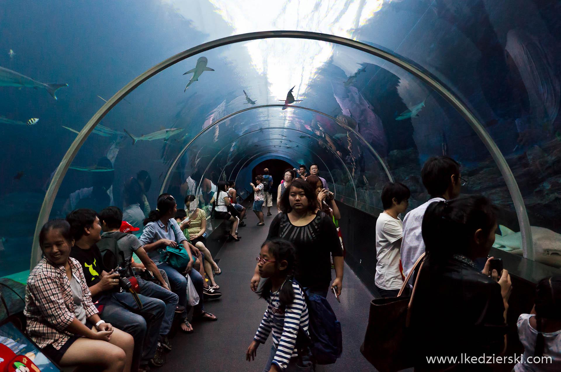 akwarium w singapurze tunel S.E.A. Aquarium