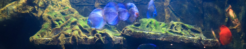 panorama akwarium na langkawi
