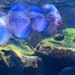 Akwarium na Langkawi – coś dla malucha
